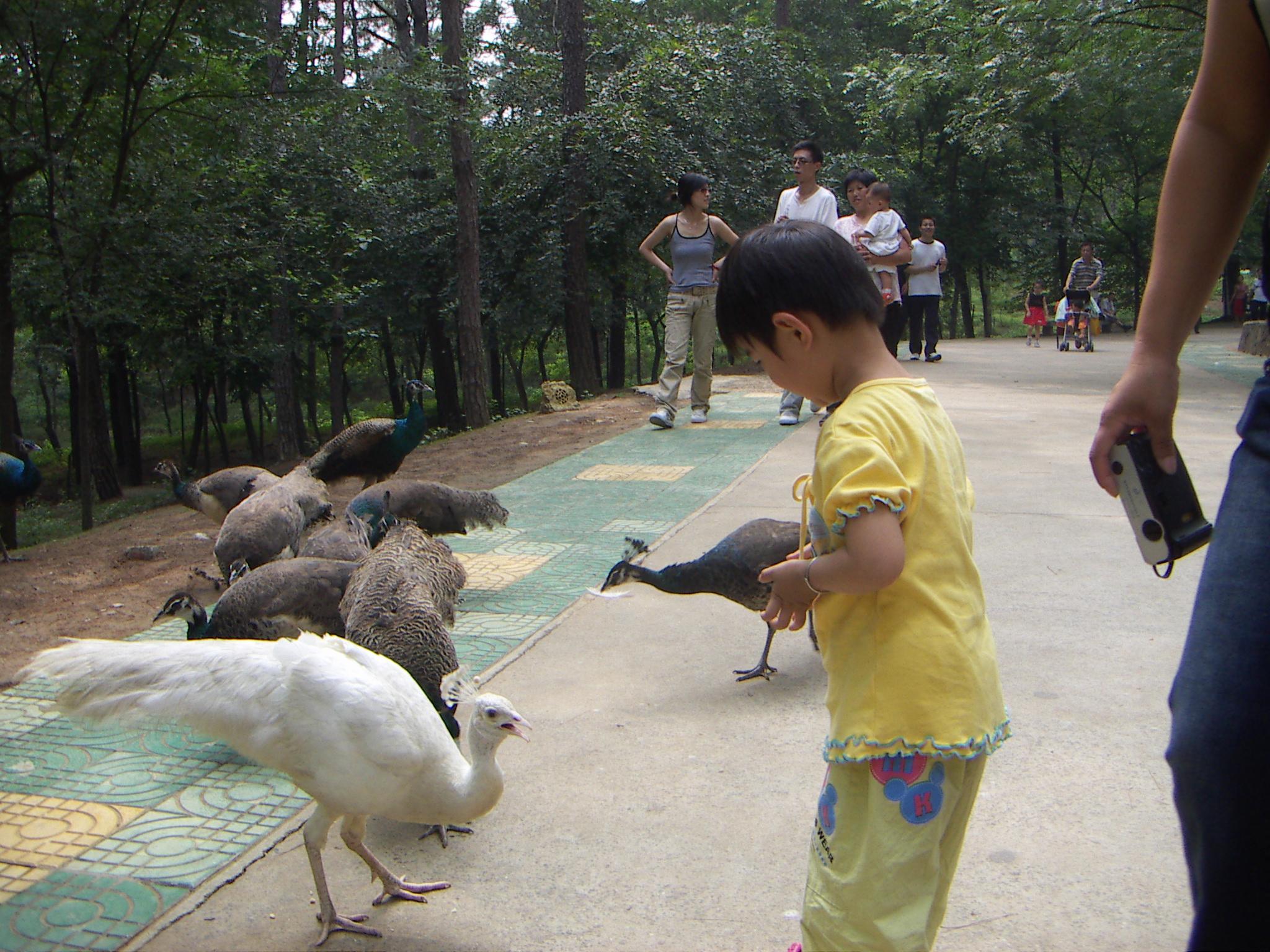 我最喜欢的小孔雀 精彩写真 曼曼